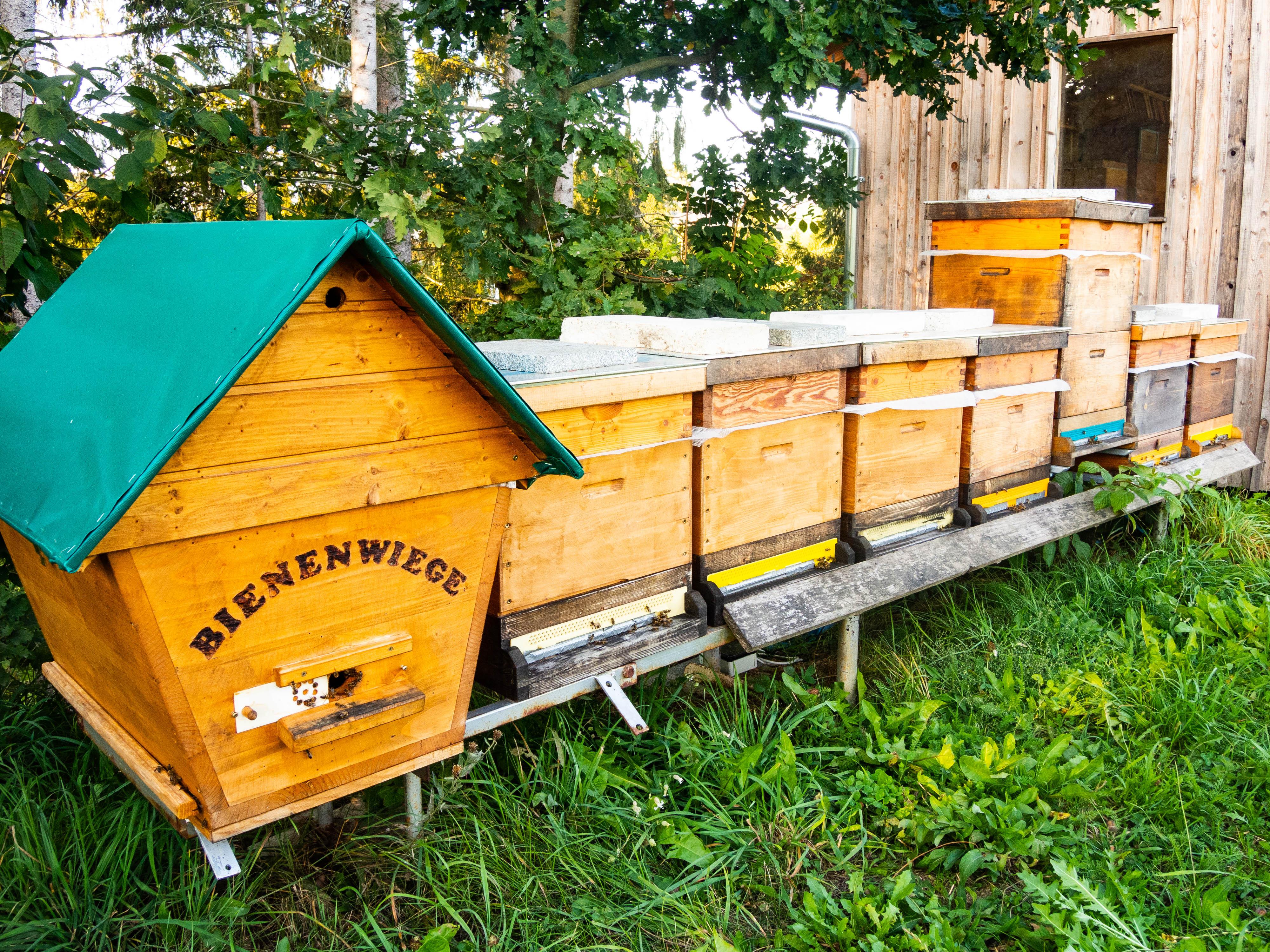 Nahaufnahme einer Bienenwiege sowie einigen Bienenstöcken